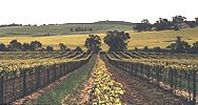 Woodbridge Farm Vineyard